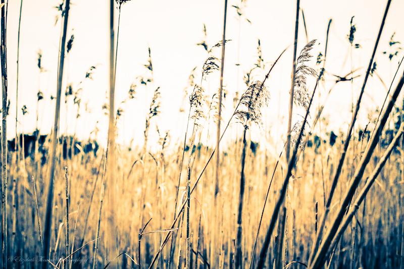 https://www.etsy.com/listing/120635708/marsh-grass-fine-art-photography-ocean