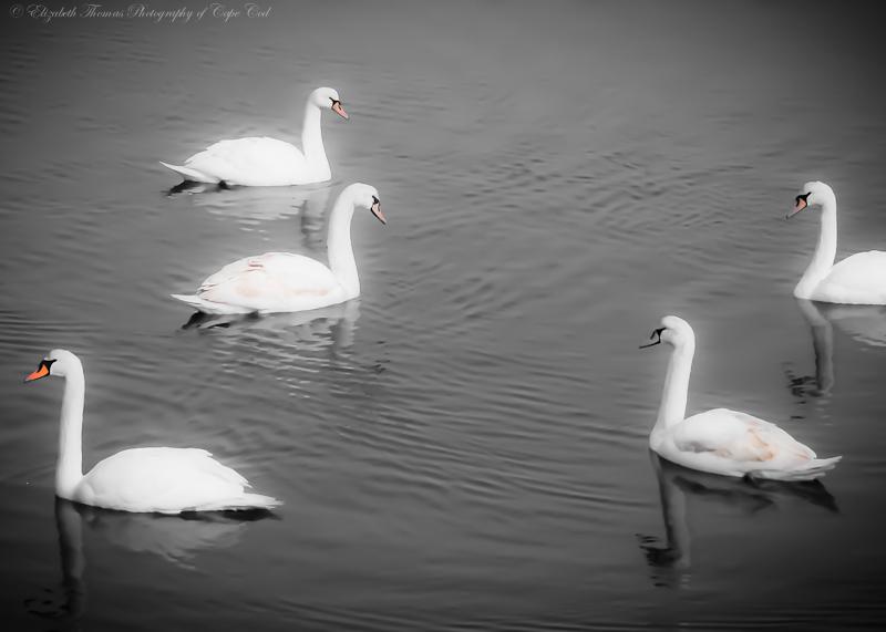 Wildlife_095