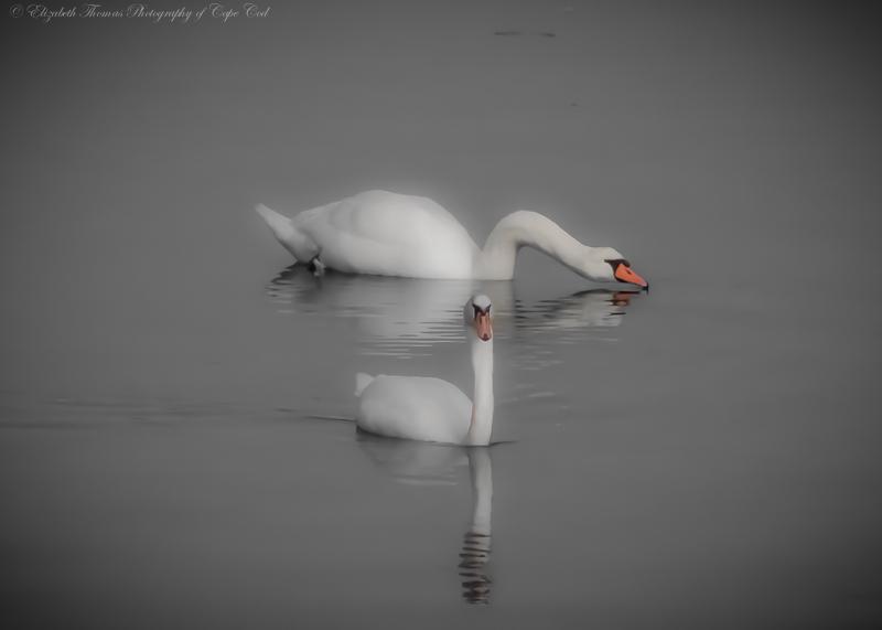 Wildlife_117