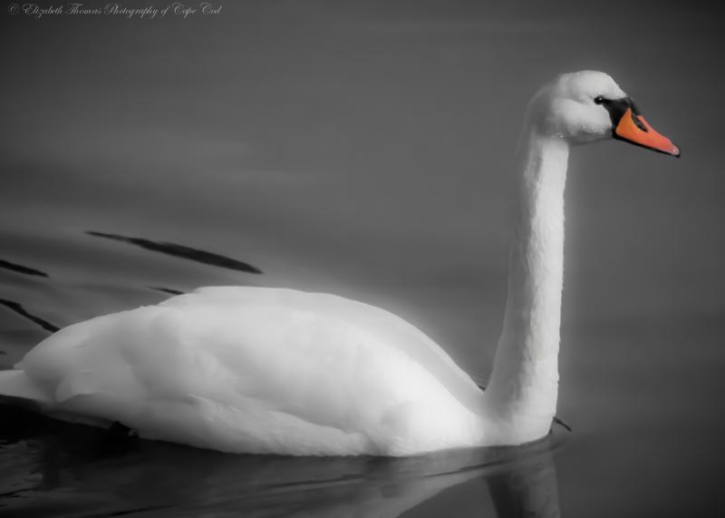 Wildlife_127a