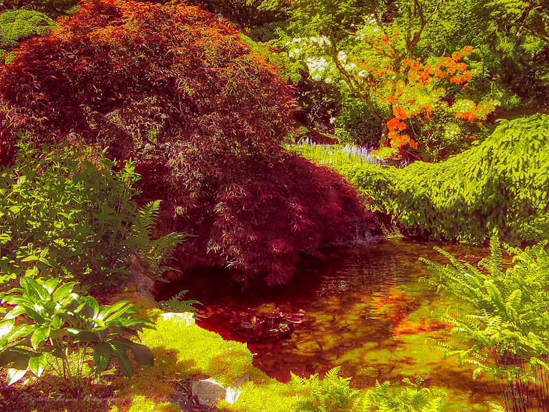 Japanese Garden 3, Butchart Gardens