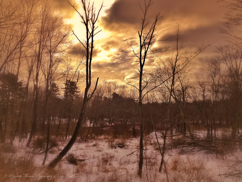 A winter wood, Bridgton Maine
