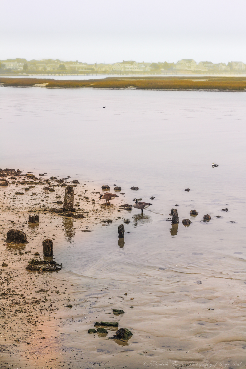 https://www.etsy.com/listing/118799724/yarmouth-coast-on-cape-cod-art-beach?ref=shop_home_active