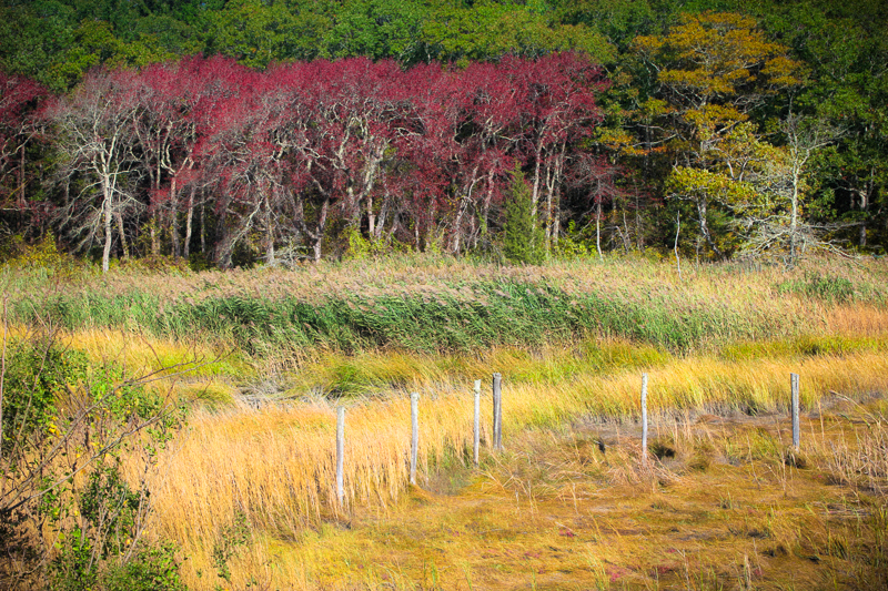 CAPE COD LANDSCAPE, MASSACHUSETTS