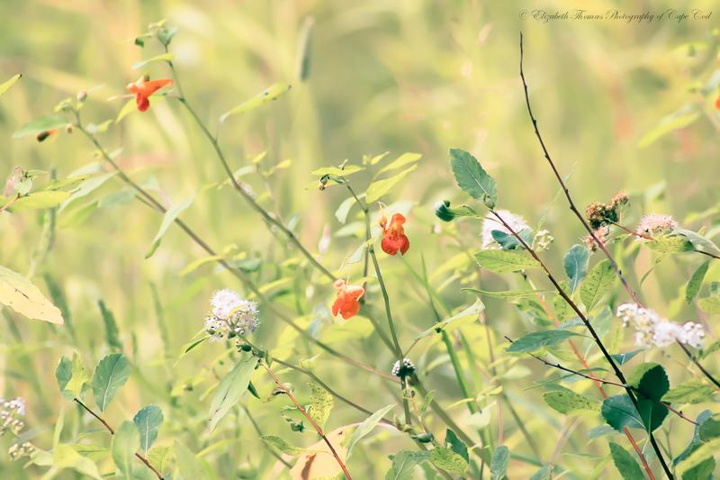 https://www.etsy.com/listing/200253774/wildflower-garden-fine-art-photography