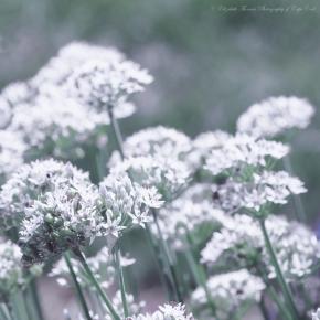 Soft pastel flowers.